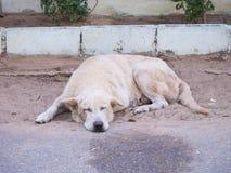 Weißer Hund Schlafens auf dem Sand auf der Straße versehen mit Seiten Stockbild