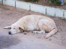 Weißer Hund Schlafens auf dem Sand auf der Straße versehen mit Seiten Stockfotos