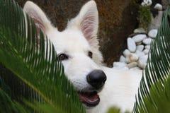 Weißer Hund versteckt unter Blättern Lizenzfreie Stockfotografie