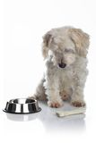 Weißer hungriger Hund Stockfotos