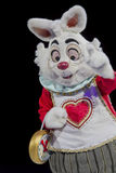 Weißer Kaninchen-Abschluss oben Stockfoto