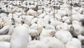 Weißer Kies und Riemen mit Frühlingen für Innenlandschaft lizenzfreie stockbilder