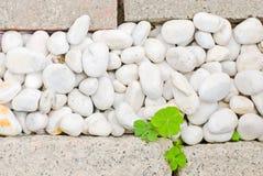 Weißer Kiesel mit grünem Blatt Lizenzfreies Stockfoto