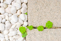 Weißer Kiesel mit grünem Blatt Lizenzfreie Stockbilder