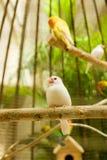 Weißer kleiner Vogel Lizenzfreie Stockbilder