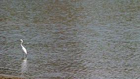 weißer Kran im Reservoir stock footage