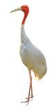 Weißer Kran lokalisiert auf Weiß Stockfoto