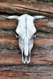 Weißer Kuh-Schädel Lizenzfreie Stockfotos