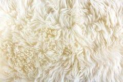 Weißer langer Haarpelzhintergrund Lizenzfreie Stockfotografie