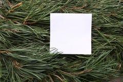 Weißer leerer Rahmen auf grüner Kiefer verzweigt sich Hintergrund Stockbilder