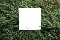 Weißer leerer Rahmen auf grüner Kiefer verzweigt sich Hintergrund Lizenzfreie Stockfotos