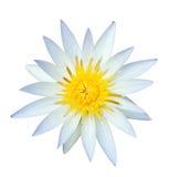 Weißer Lotos auf Weiß Lizenzfreies Stockbild