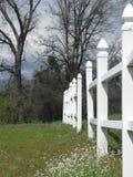 Weißer Palisadenzaun in blühender Wiese Stockbilder