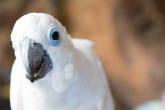 Weißer Papagei Stockbilder