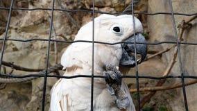 Weißer Papagei Stockfoto
