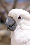 Weißer Papagei Lizenzfreies Stockbild