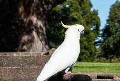 Weißer Papagei steht auf dem Beton still Stockbild