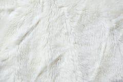 Weißer Pelzabschluß oben lizenzfreie stockbilder