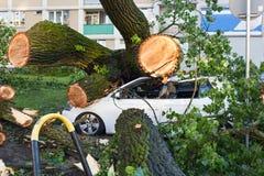 Weißer Personenkraftwagen zerquetscht durch gefallenen Baum lizenzfreie stockfotos