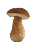 Weißer Pilz Stockfoto