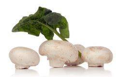 Weißer Pilz stockfotografie