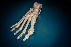 Weißer Prototyp des Skeletts des menschlichen Fußes druckte auf Drucker 3d auf dunkler Oberfläche stockfotos