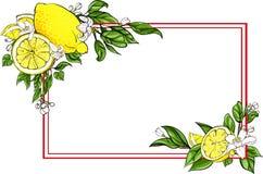 Weißer rechteckiger Hintergrund mit Zitrone stock abbildung