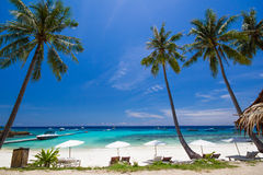 Weißer Regenschirm und Stühle unter Kokosnussbaum Lizenzfreies Stockfoto