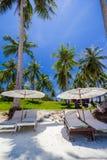 Weißer Regenschirm und Stühle unter Kokosnussbaum Stockfoto