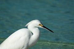 Weißer Reiher auf einem Strand Stockbild
