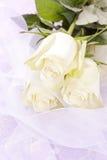 Weißer Roseblumenstrauß Stockbilder