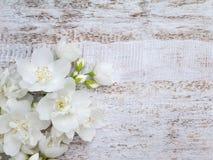 Weißer süßer Spott-orange Blumenblumenstrauß Lizenzfreie Stockfotos