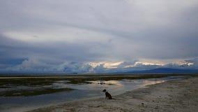Weißer Sand-Strand Siquijor mit Hund stock footage