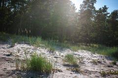 Weißer sandiger Strand nahe dem Wald Stockbild