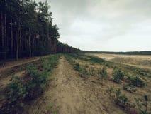 Weißer sauberer Sandbergbau für Glasproduktion Wiederherstellung des gewonnenen Gebiets Stockbild