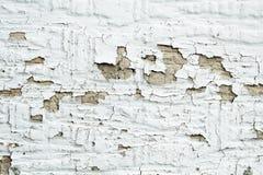 Weißer Schalenlack Lizenzfreie Stockfotografie