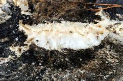Weißer Schaum gegen ein dunkles gesprenkeltes Abstraktion Stockbilder