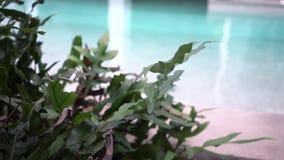 Weißer Schmetterling fliegt über grüne Büsche, über einer grünen Blume, nahe einem Pool mit blauem Wasser stock footage
