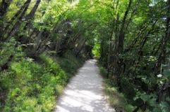 Weißer Schmutzpfad durch Bäume Stockbilder