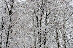 Weißer Schnee auf den Bäumen im Park lizenzfreie stockbilder