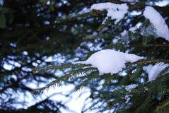 Weißer Schnee auf der Kiefer Stockfoto