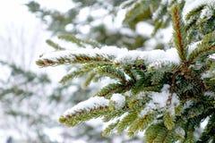Weißer Schnee auf grünen Blättern Stockbilder
