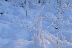 Weißer Schnee der Nadel im Winter im Gras auf einem Wintermorgen Stockfotografie
