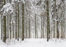 Weißer Schnee des verschneiten Winters Waldim kalten eisigen Waldwinterhintergrund stockfotos