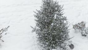 Weißer Schnee fällt auf Weihnachtsbaum stock video