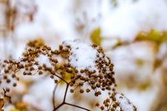Weißer Schnee liegt auf braunen Niederlassungen Stockbild
