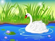 Weißer Schwan See mit schönen Seerosen vektor abbildung