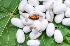 Weißer silk Kokon stockfoto