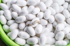 Weißer silk Kokon lizenzfreie stockbilder