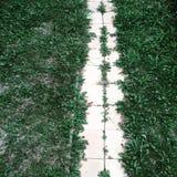 Weißer Stein deckt Gasse im Gras mit Ziegeln Stockfotografie
